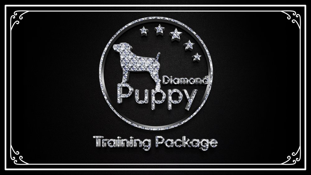 San Antonio puppy training boerne dog training austin obedience training house breaking puppy san marcos stone oak canine training courses
