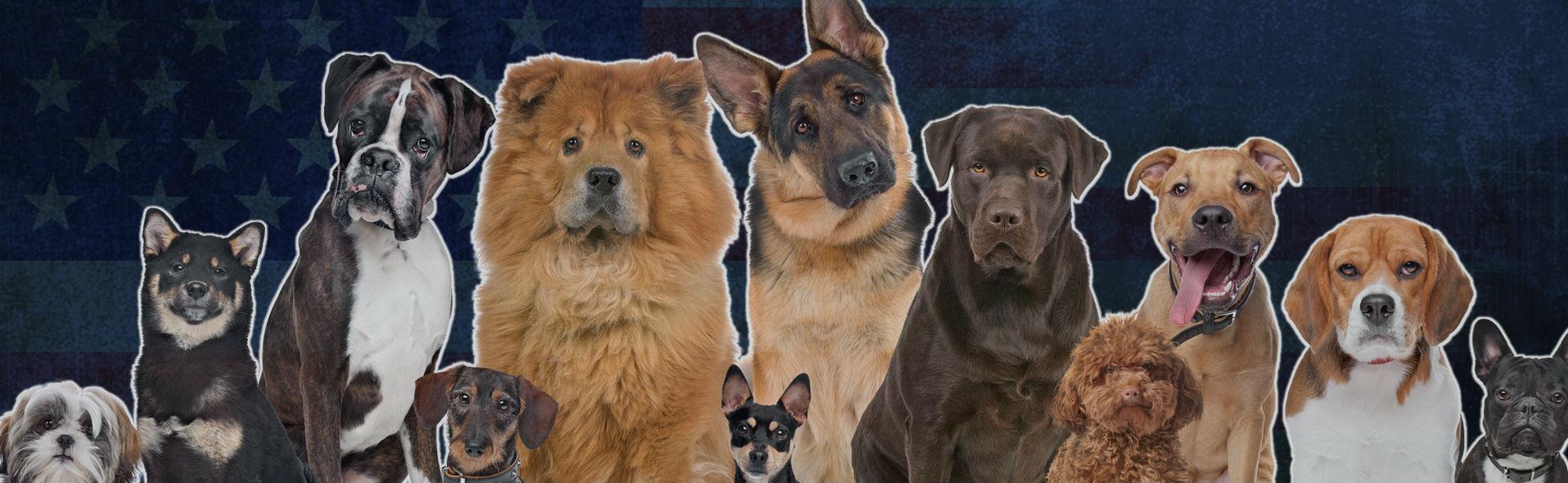 Puppy Training - Patriot Dog Training