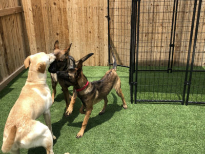 San Antonio Dog Training Austin Doggy Daycare Bulverde Dog Boarding Boerne Canine Obedience Training New Braunfels Dog Trainers