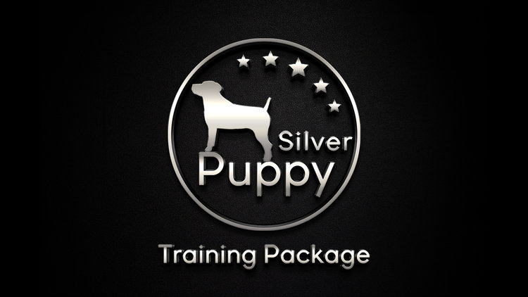 San Antonio puppy training boerne dog training austin obedience training house breaking puppy san marcos stone oak puppy trainer courses