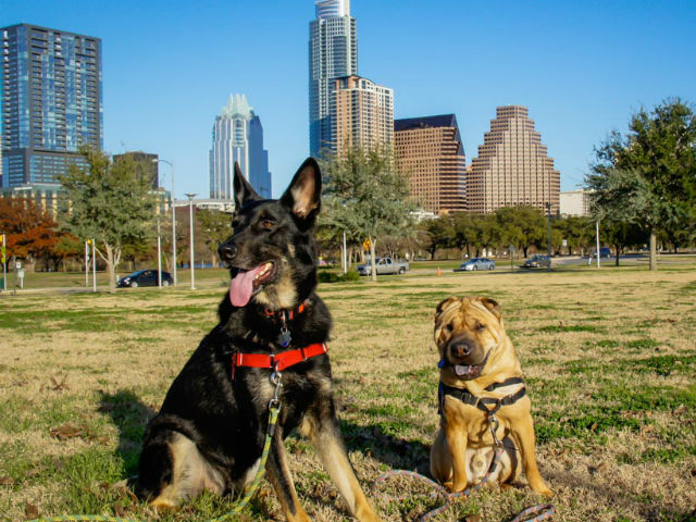austin dog training austin dog obedience austin dog trainer austin canine training austin puppy training austin dog training facility best austin dog trainer