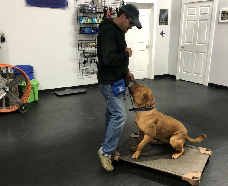 Adult Dog training san antonio dog training san antonio dog trainer san antonio dog obedience training san antonio dog training facility san antonio canine training san antonio puppy training san antonio