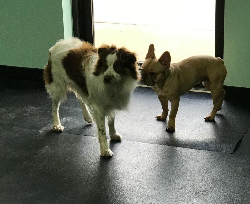 Group Dog training classes san antonio dog training classes san antonio dog trainer san antonio dog training san antonio dog obedience classes san antonio canine training san antonio