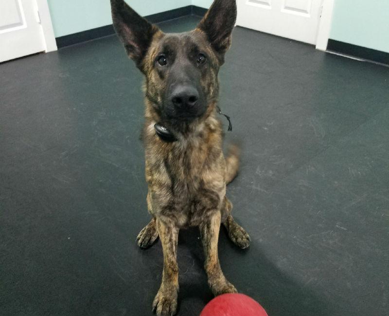San Antonio private dog training san antonio dog training classes san antonio dog obedience training san antonio dog trainer san antonio canine training