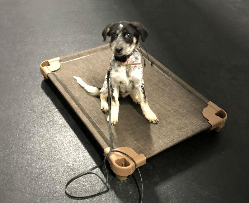 Puppy Training San Antonio Puppy obedience training san antonio puppy house training san antonio canine obedience training san antonio dog training san antonio puppy training classes san antonio