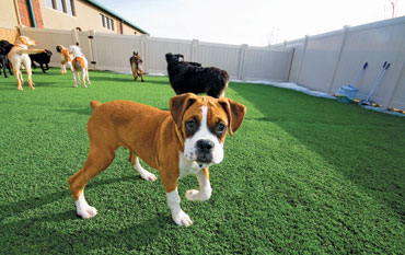 New Braunfels Doggy Day Care New Braunfels Pet Resort New Braunfels Dog Resort New Braunfels Dog Hotel New Braunfels Doggie Day Care