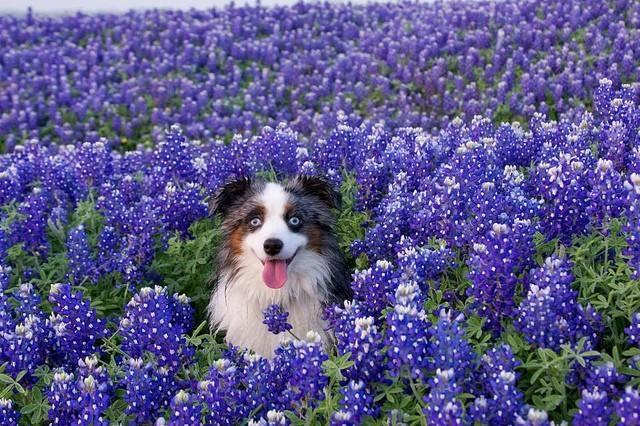 Boerne Dog Training Boerne Dog Trainer Boerne Dog Boarding Boerne Dog Obedience Canine Training Boerne Doggy Daycare Boerne