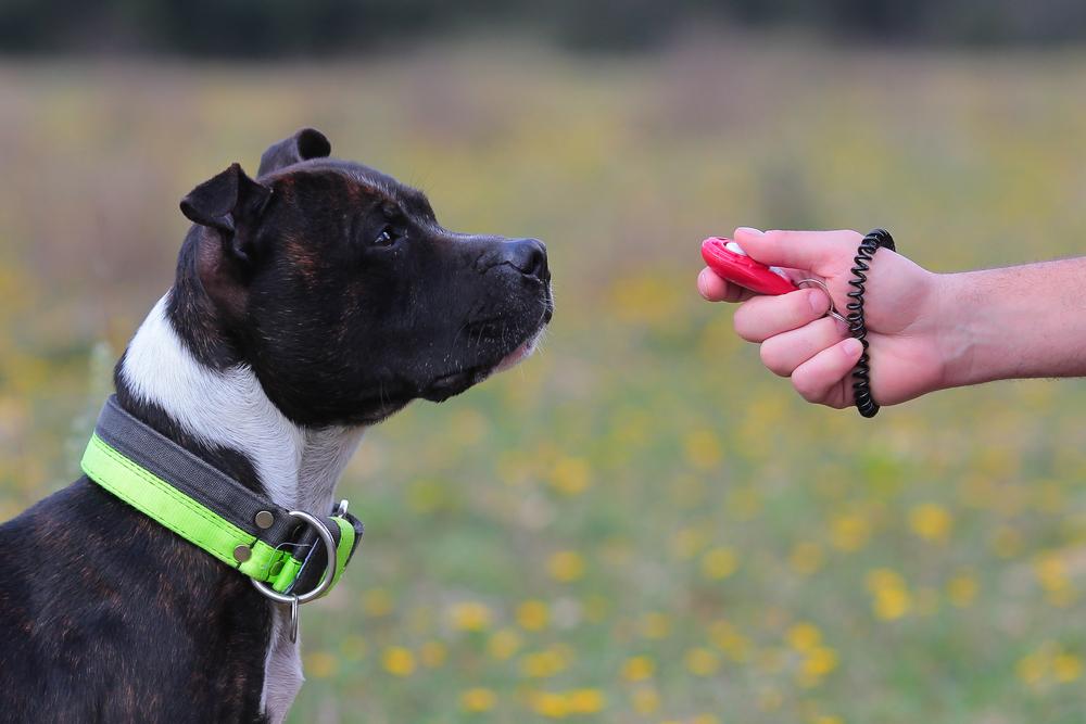 San antonio dog trainer austin dog training classes dog obediene training boerne best dog trainer san antonio