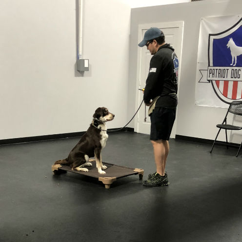 Boerne adult dog training dog trainer boerne best dog training boerne dog obedience training boerne