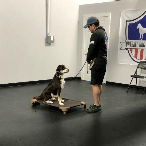 Boerne adult dog training dog trainer boerne best dog training boerne dog obedience training boerne