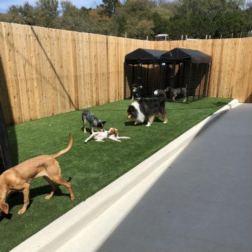 Boerne doggy day care boerne dog sitting boerne dog hotel boerne doggie daycare