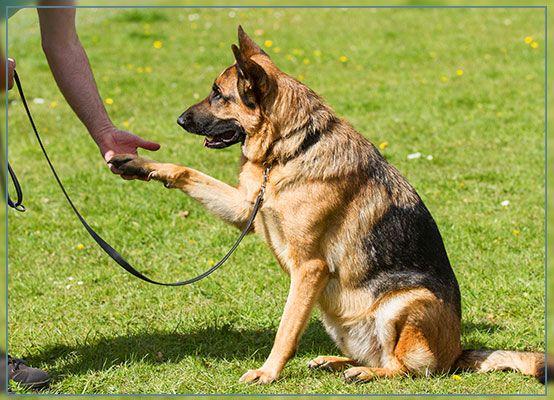 New Braunfels Private Dog Training New Braunfels Personal Dog Training New Braunfels Private Dog Trainer New Braunfels Obedience Training
