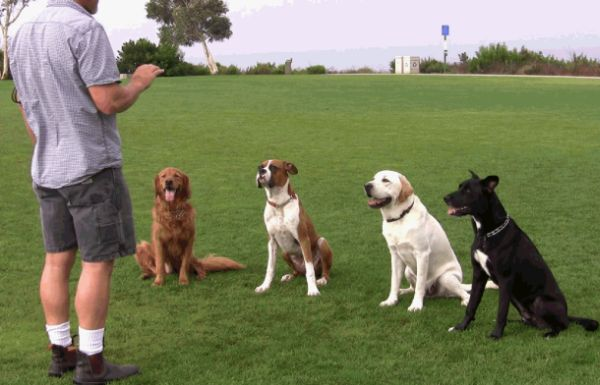 dog trainer helotes dog obedience training helotes puppy training helotes