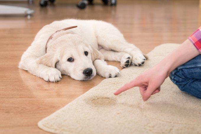 San Antonio dog training austin dog trainer san antonio canine training austin dog obedience training