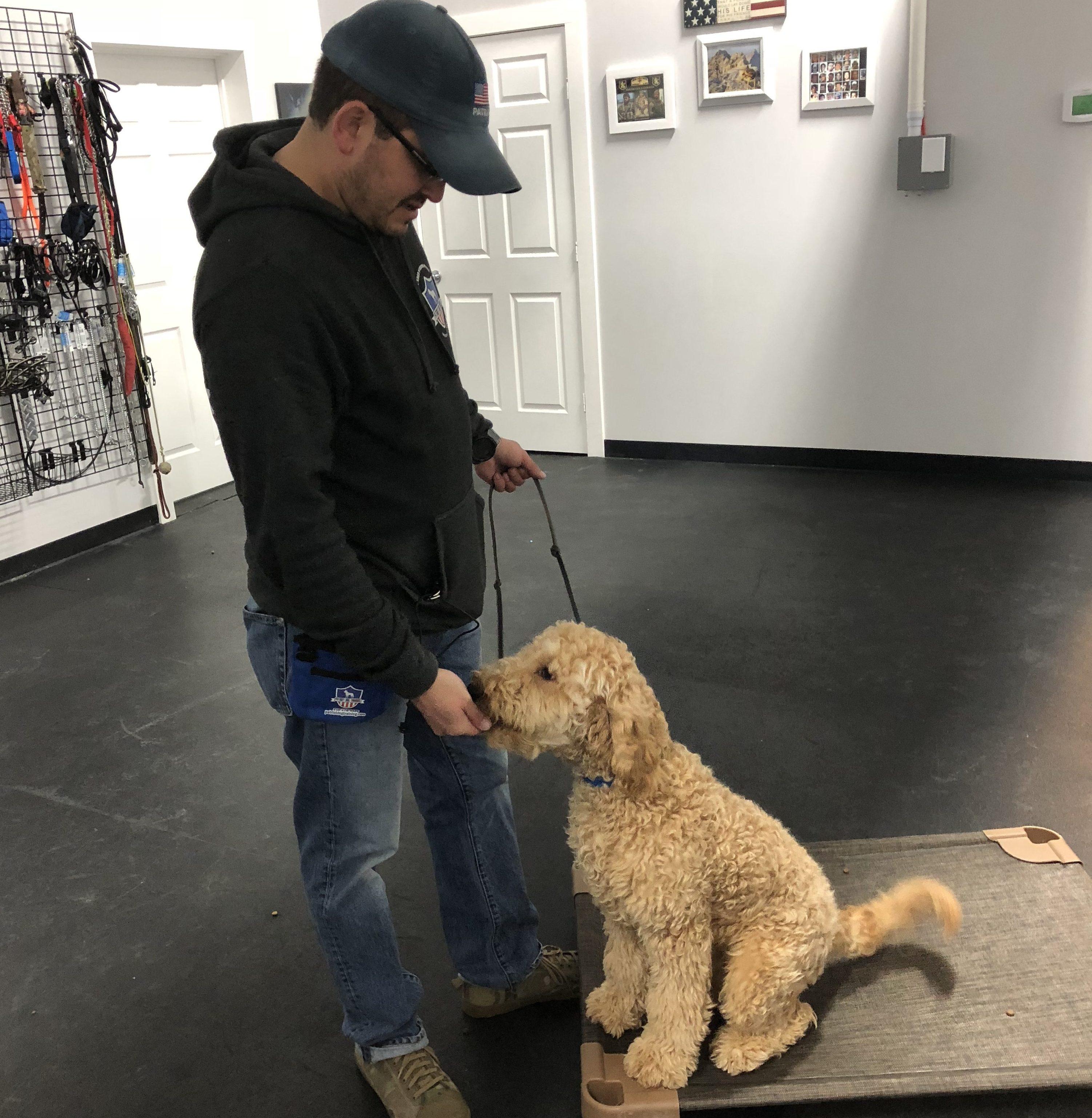 dog training buda dog training service buda canine training buda