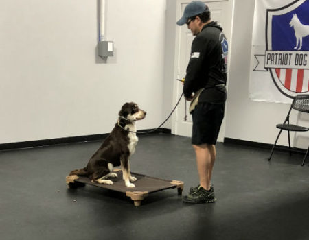 stone oak dog training san antonio dog training
