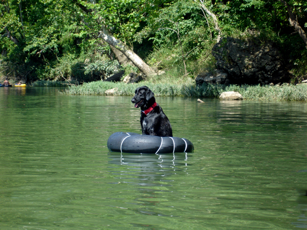 dog training dripping springs tx