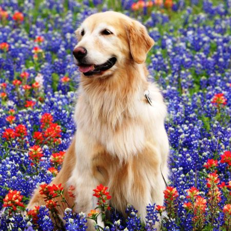 dog training hill country