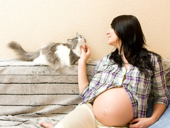 Toxoplasmose NÃO é a doença do gato