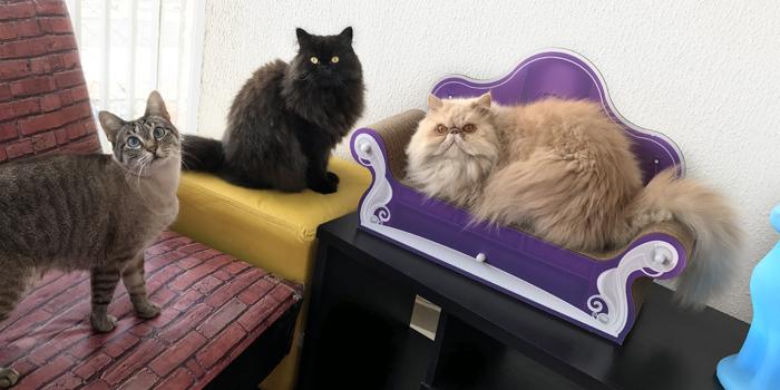 Decoração e gatos: 8 dicas para deixar sua casa ainda mais linda