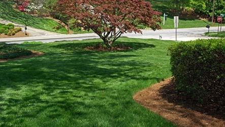 Deep Root Tree and Shrub Fertilizing