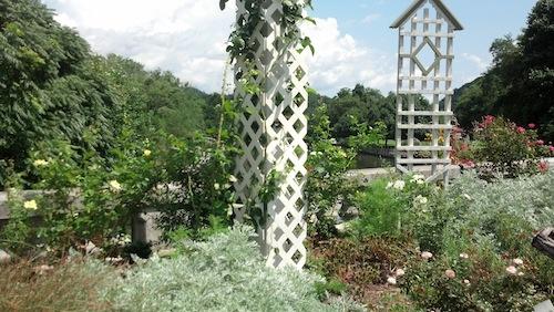 Trellis in the Rose Garden at Flowering Bridge