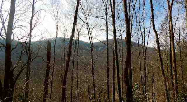 Hiking Lake Lure, NC Florence Nature Preserve View