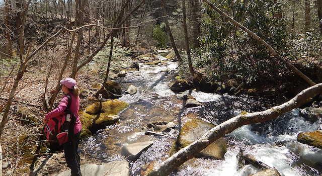 Creek along Little Bearwallow Falls Hike