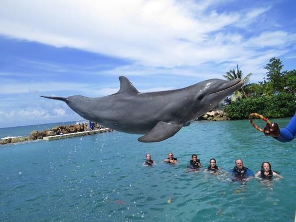 Photo Credit: Dolpin Cove Jamaica