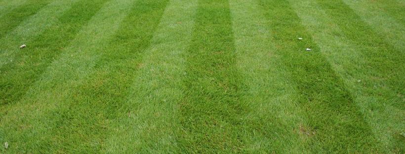organic lawn care seniors
