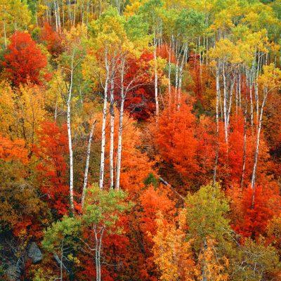 Ken Takata Autumn Blaze Photograph
