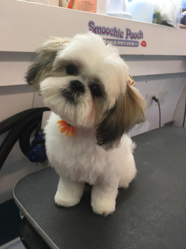 Local Mobile Dog Groomers