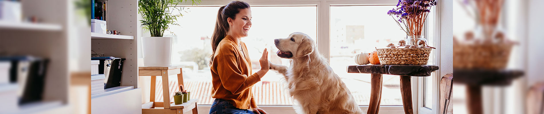 Pet treatment in Indiana