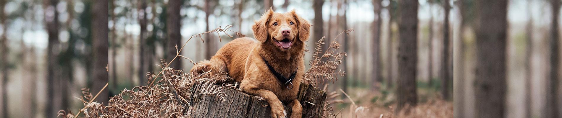 Dog Grooming Indiana