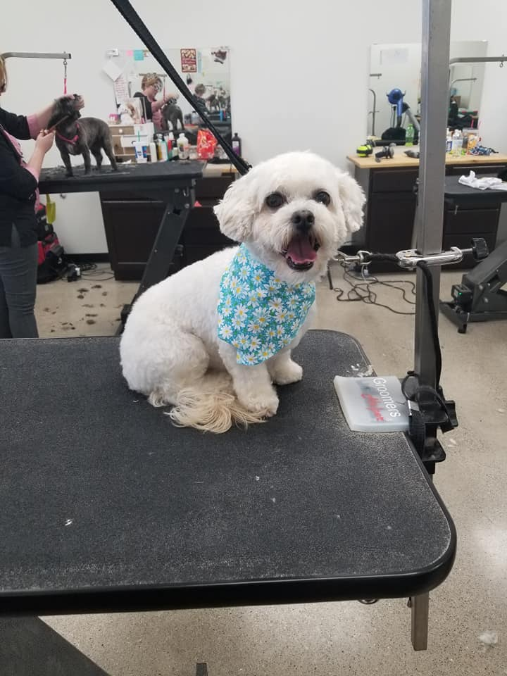 Dog Grooming In Crown Point, Indiana