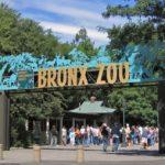 Carteret Summer Bus Trip: The Bronx Zoo