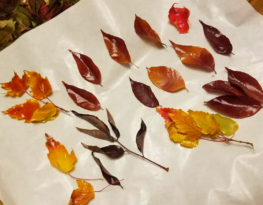 Wax Dipped Leaves Fall Decor