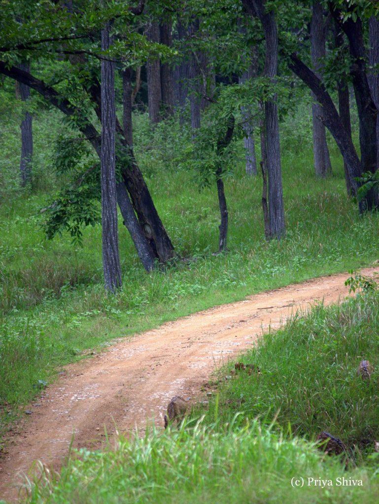 road trip - Bangalore to Nagarahole