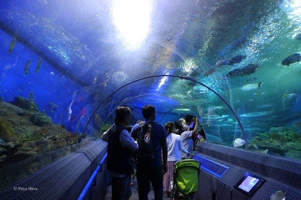 Underwater sea world Pattaya