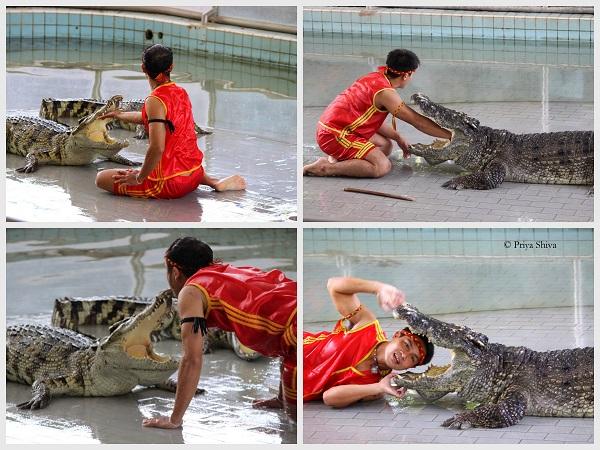 crocodile park pattaya