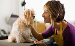 Using Essential Oils for Your Pets