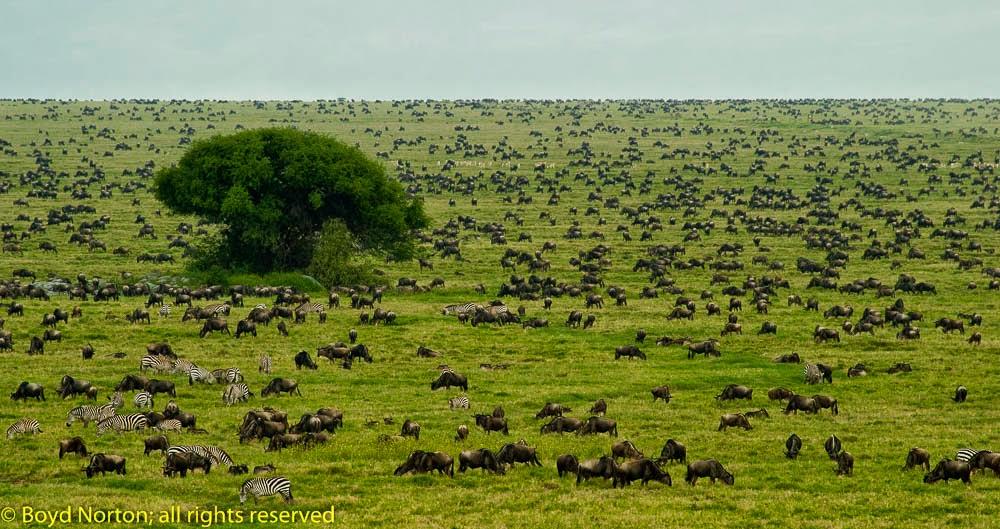 We Thought We Had Won the Serengeti Battle, But . . .