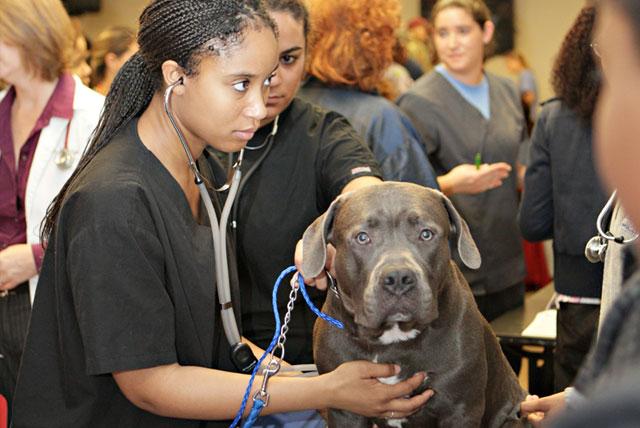 Tuskegee University veterinary students examine a dog.