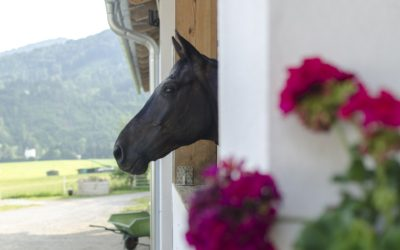 Starting a Successful Horse Boarding Business