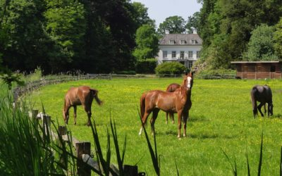 Getting Your Horse Farm Ready For Sale