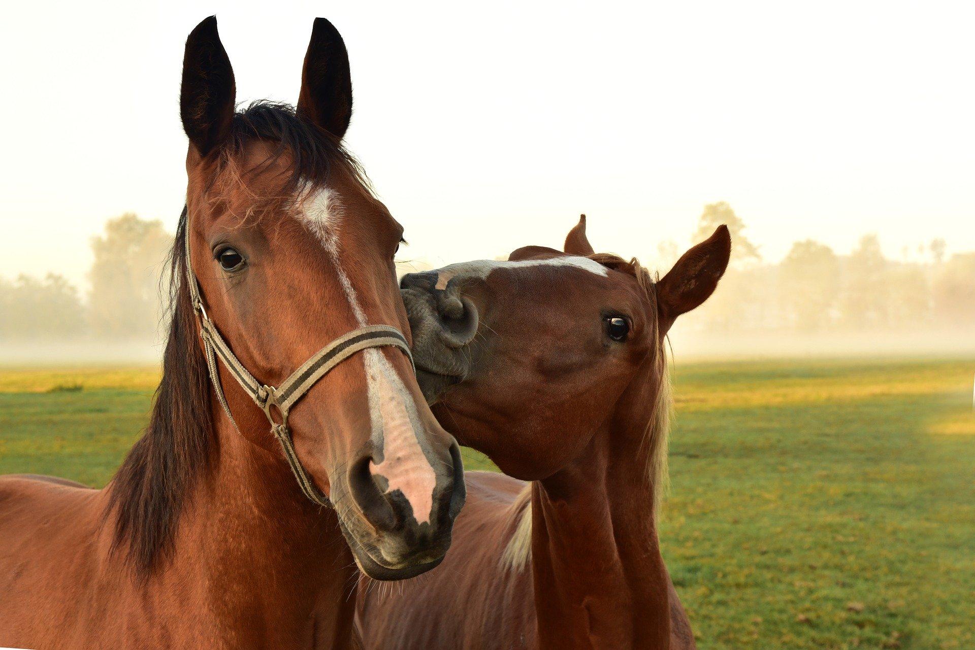 Horses in Pasture - Halton Region