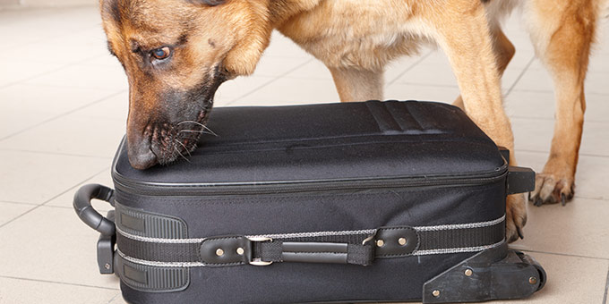Dog Drug Search