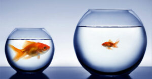 A big goldfish in a small fish bowl next to a small goldfish in a big fish bowl