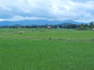 The cozy Lan Na landscape, near Nan, Thailand.