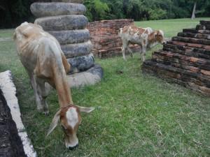 Making friends at Wat Chedi Si Hong, Sukhothai, Thailand.